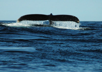 WhaleTale
